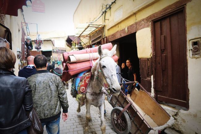 Balak! Balak! Watch Out! Donkey Crossing Vehicle Transportation in Ancient City Fes Morocco