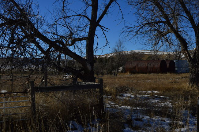 Old oil tanks Bare Tree Branch Cold Day Field Grass Outdoors Winter