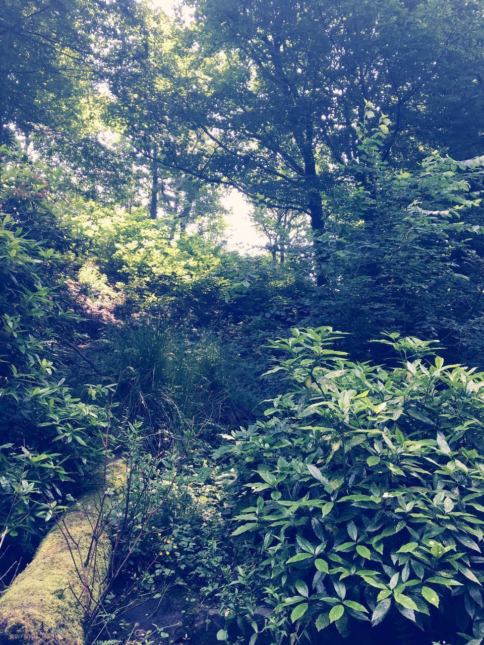 nature, forest, growth, adventure, plant, day, sunshine, outdoors, no people