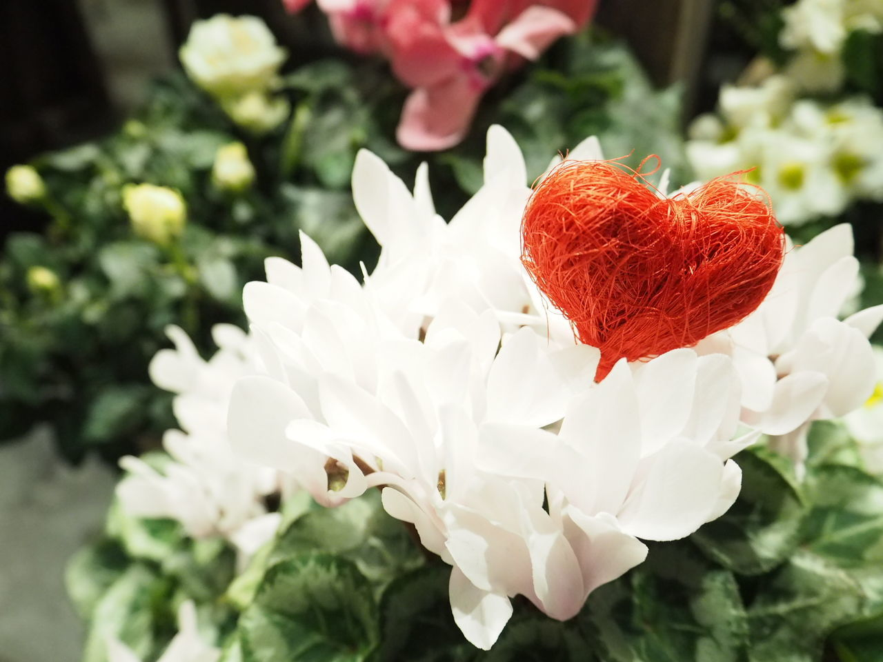 Flower Flowers Flowerporn Flower Shop Nature Heart Prevalentines Olympus Olympus Om-d E-m10 Noedit Nofilter