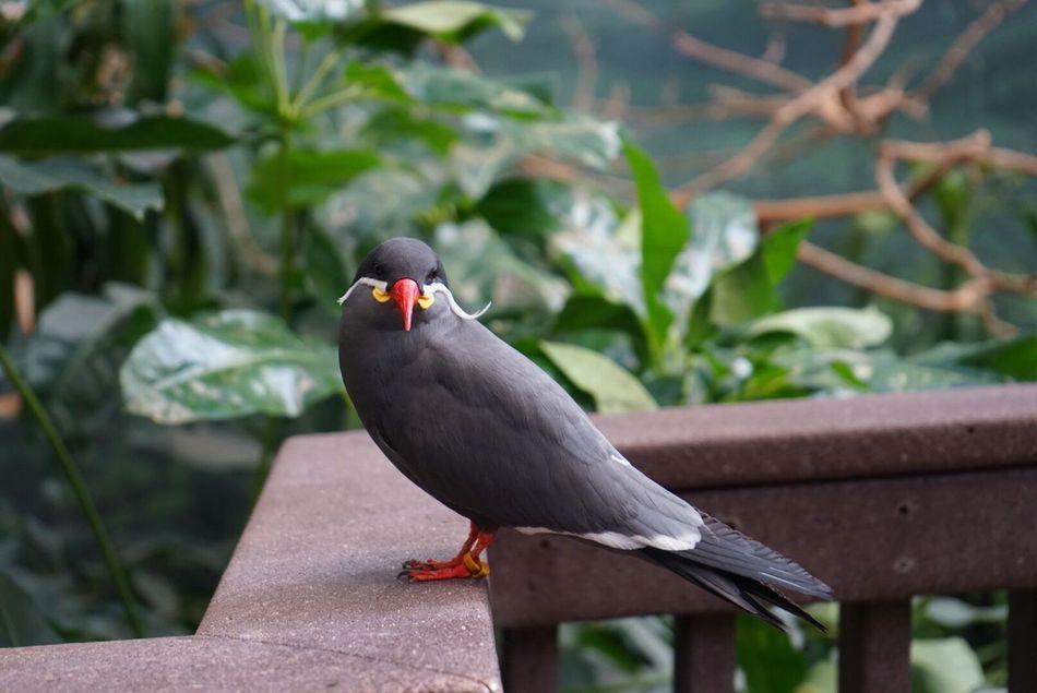 Beautiful stock photos of schnurrbart,  Animal Wildlife,  Animals In The Wild,  Bird,  Black Color