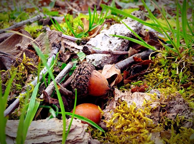 The view of the forest floor is so riddled with adventure and wonder. Acorn Forest Photography Leaves Dead Leaves Woods EyeEm Nature Lover Hiking Bugslife Imagination