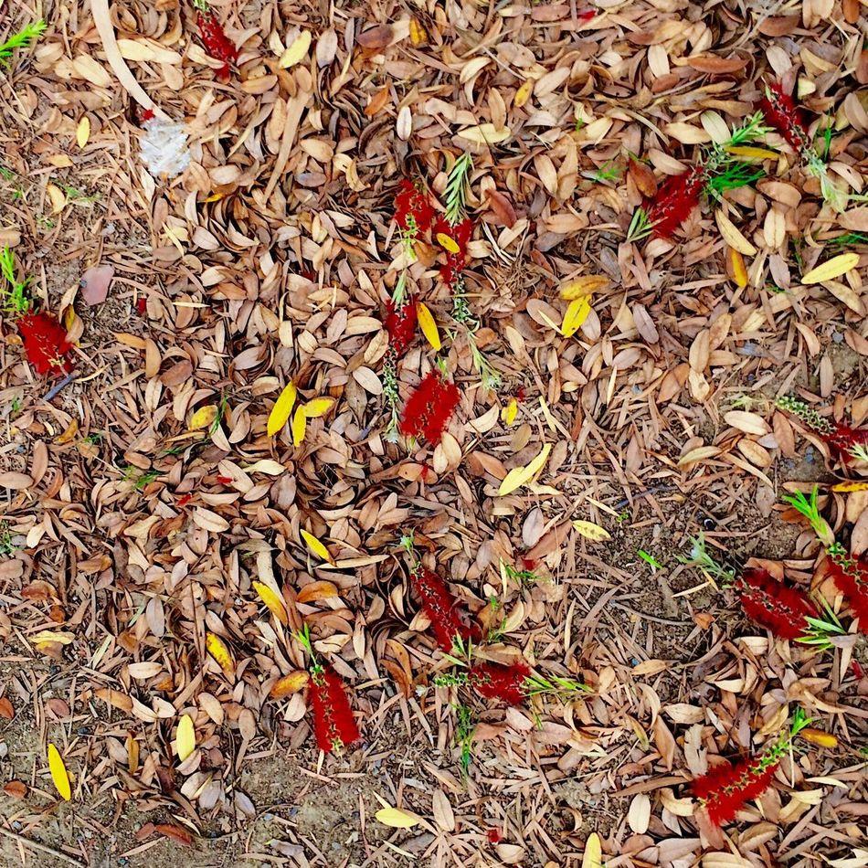 Naturebeauty Spring Flower Leaves