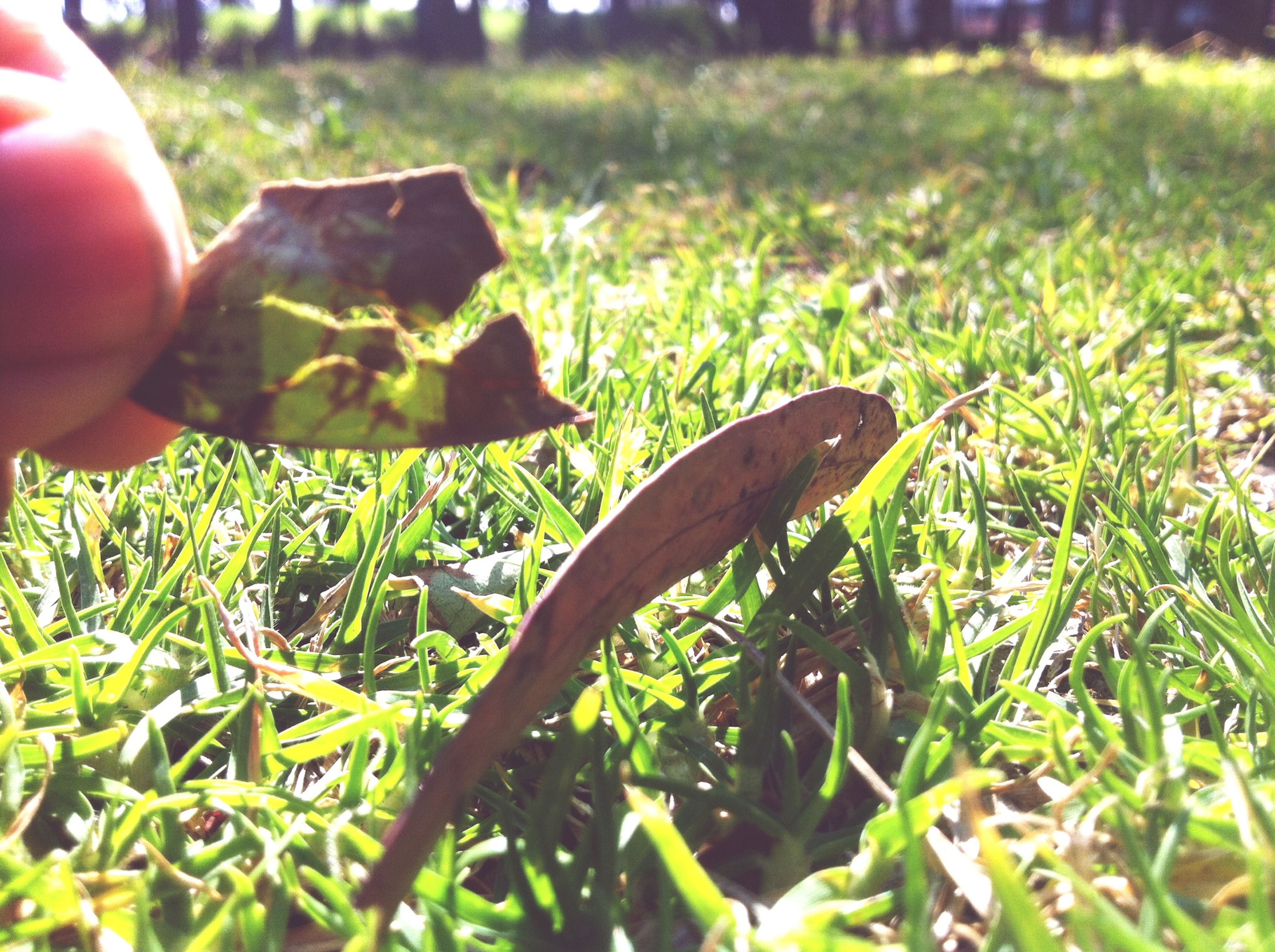 grass, grassy, green color, field, growth, plant, close-up, focus on foreground, nature, part of, selective focus, day, cropped, outdoors, leaf, sunlight, lawn