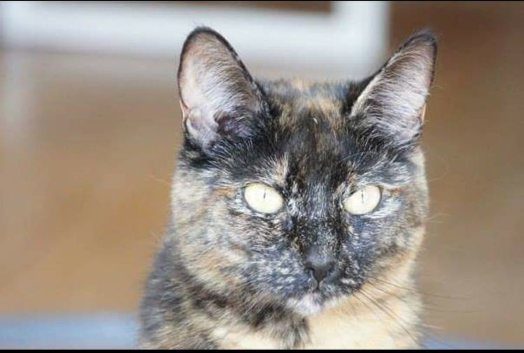 Domestic Cat Domestic Animals Pets Mammal Indoors  Close-up No People Day My Cat :) Slimmie.