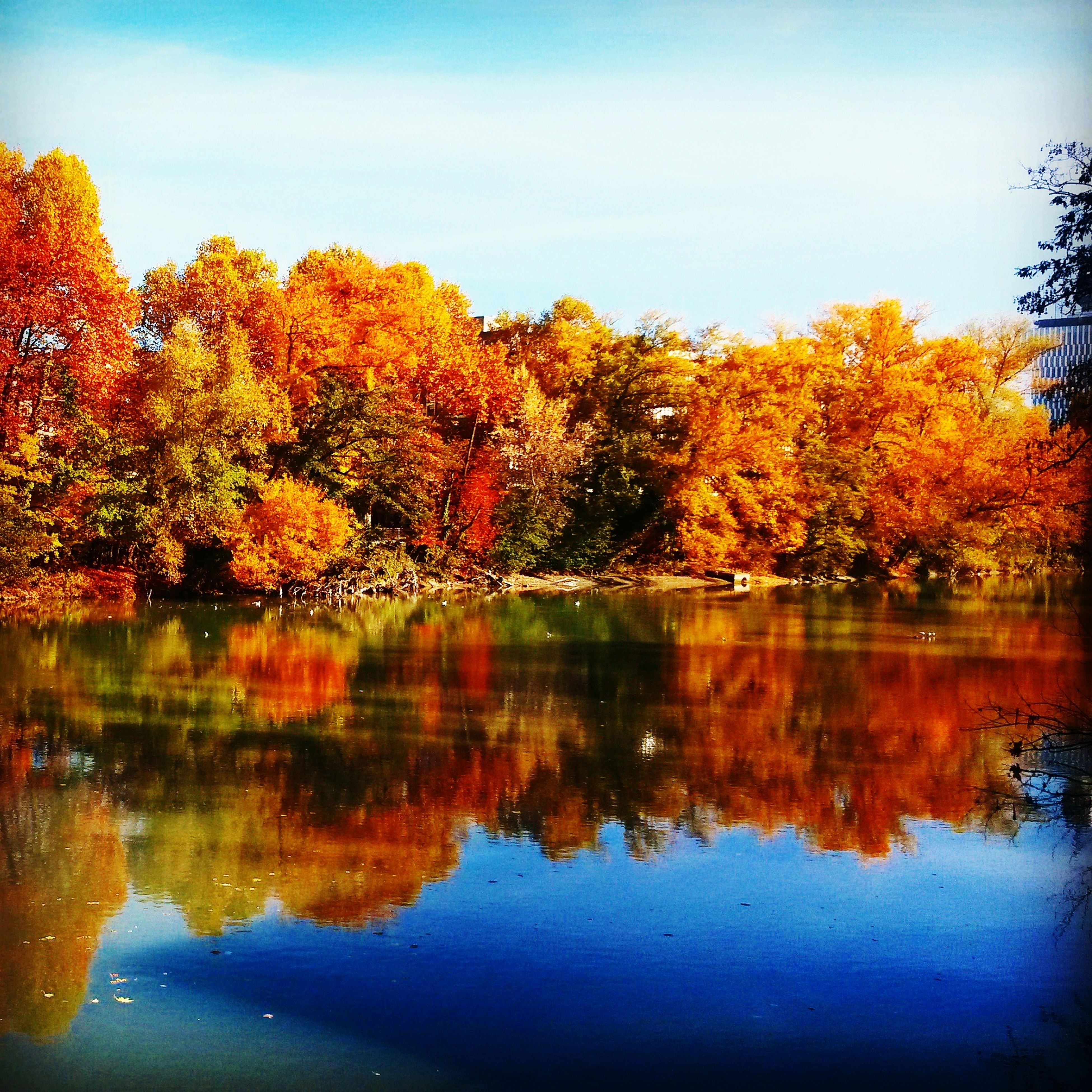 tree, autumn, reflection, nature, beauty in nature, change, lake, water, scenics, tranquil scene, no people, tranquility, sky, leaf, outdoors, day