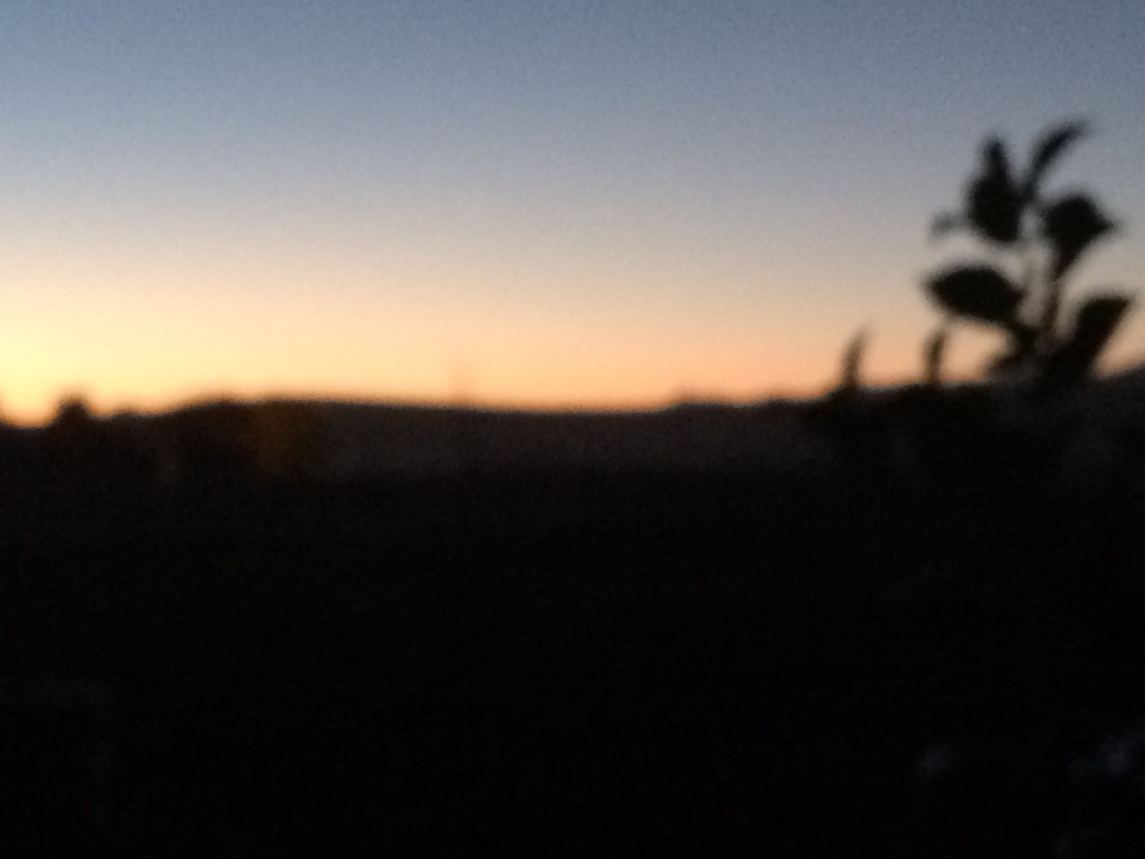 sunset, nature, silhouette, tranquility, beauty in nature, no people, scenics, sky, outdoors, close-up, day