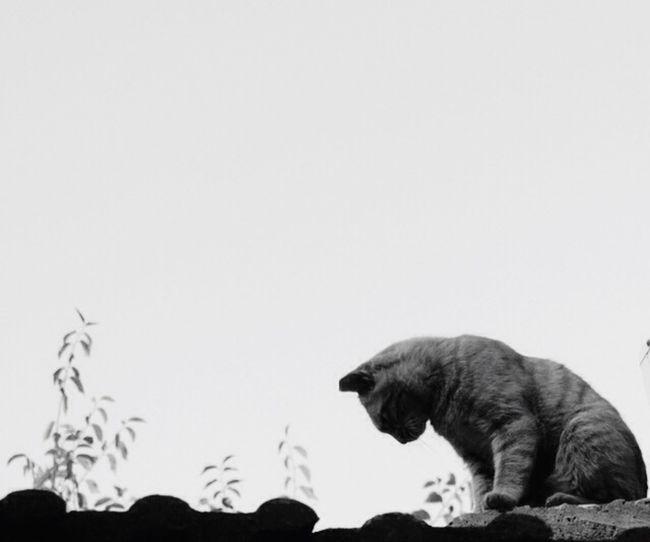 所以 你每天都和你老婆在房顶发呆冥想 畅聊猫生了?