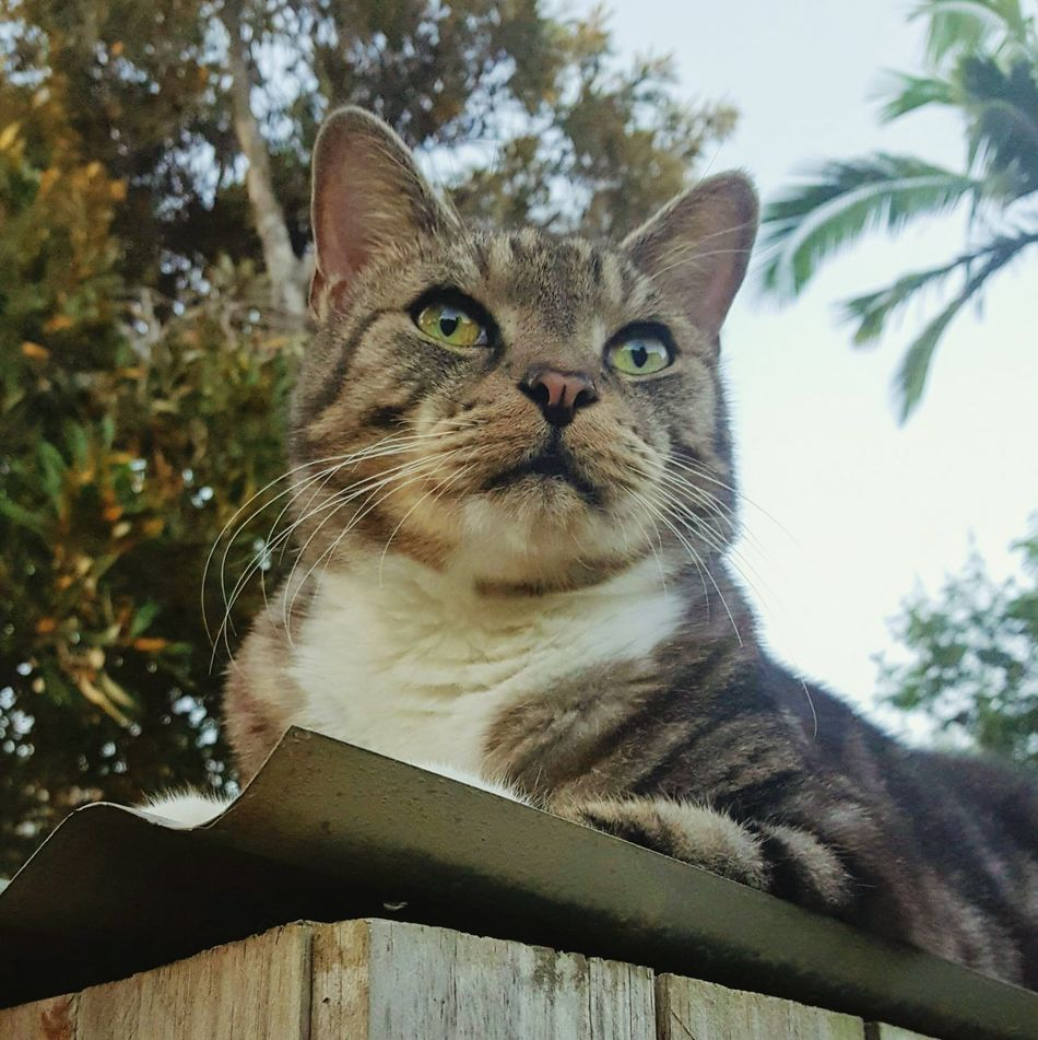 One Animal Domestic Cat Pets Mammal Domestic Animals Animal Themes Feline Whisker Portrait Looking At Camera No People Day Outdoors Close-up