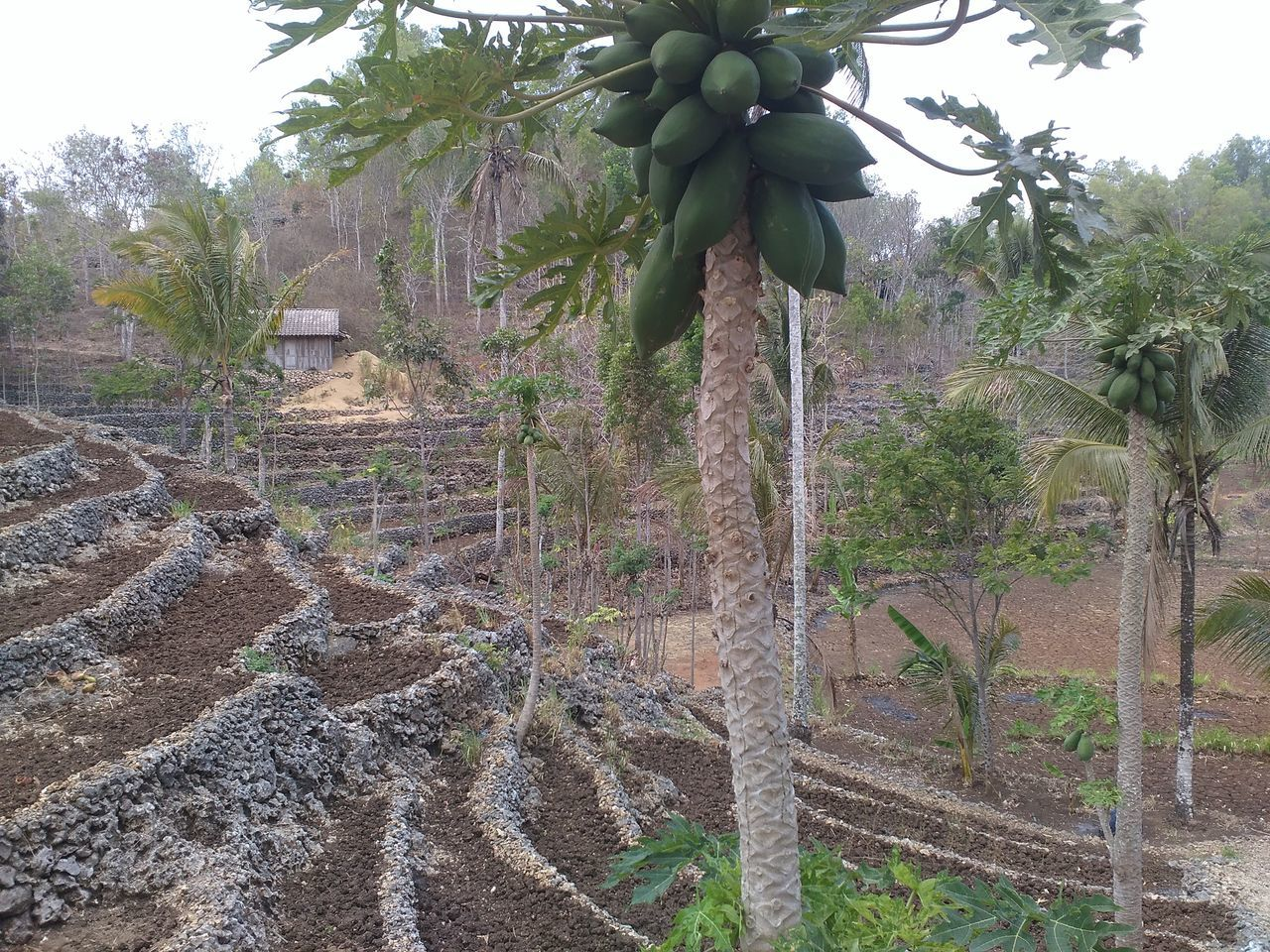 How Do We Build The World? Agroforestry Agro-silviculture Wonogiri Plant Photography Indonesianature