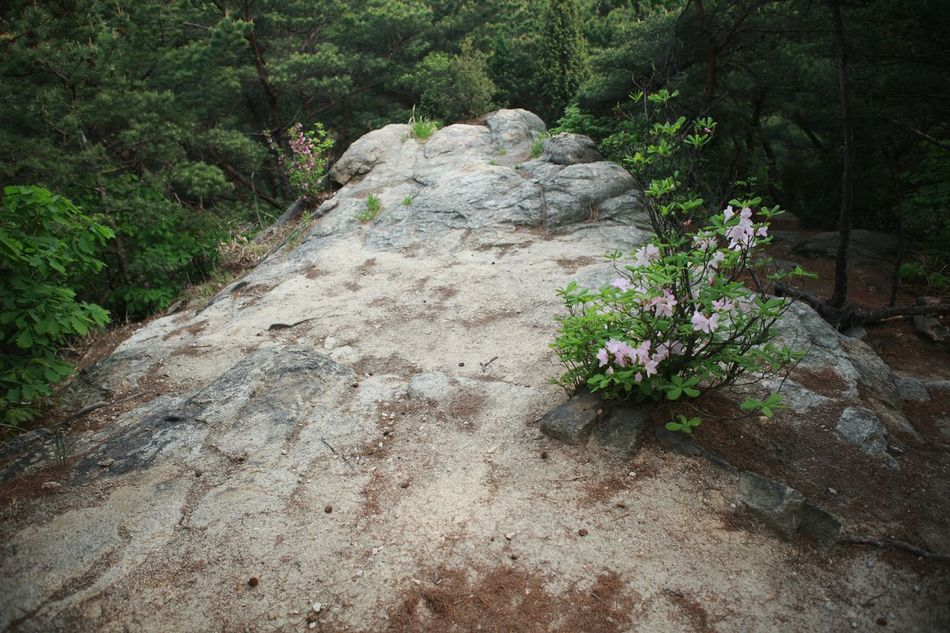 Morning Rocknflower Flower Slow Day You 바른생태살림원 | be the Nature