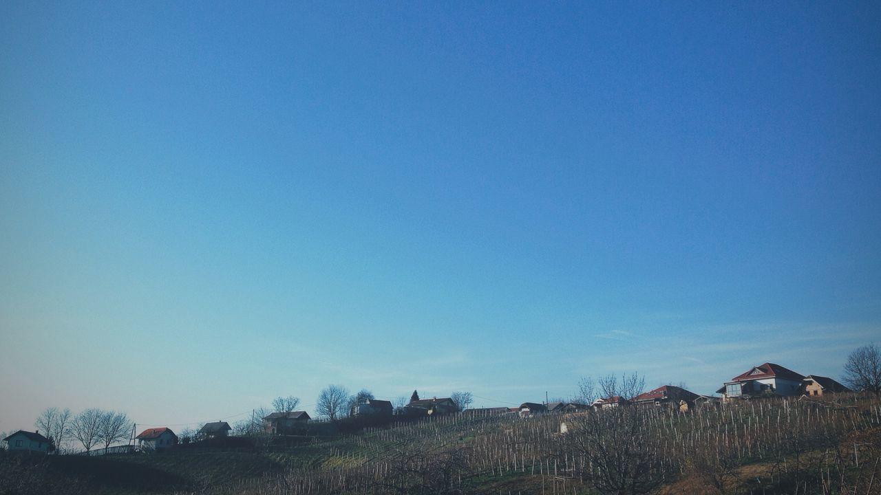 Vineyard Against Clear Blue Sky