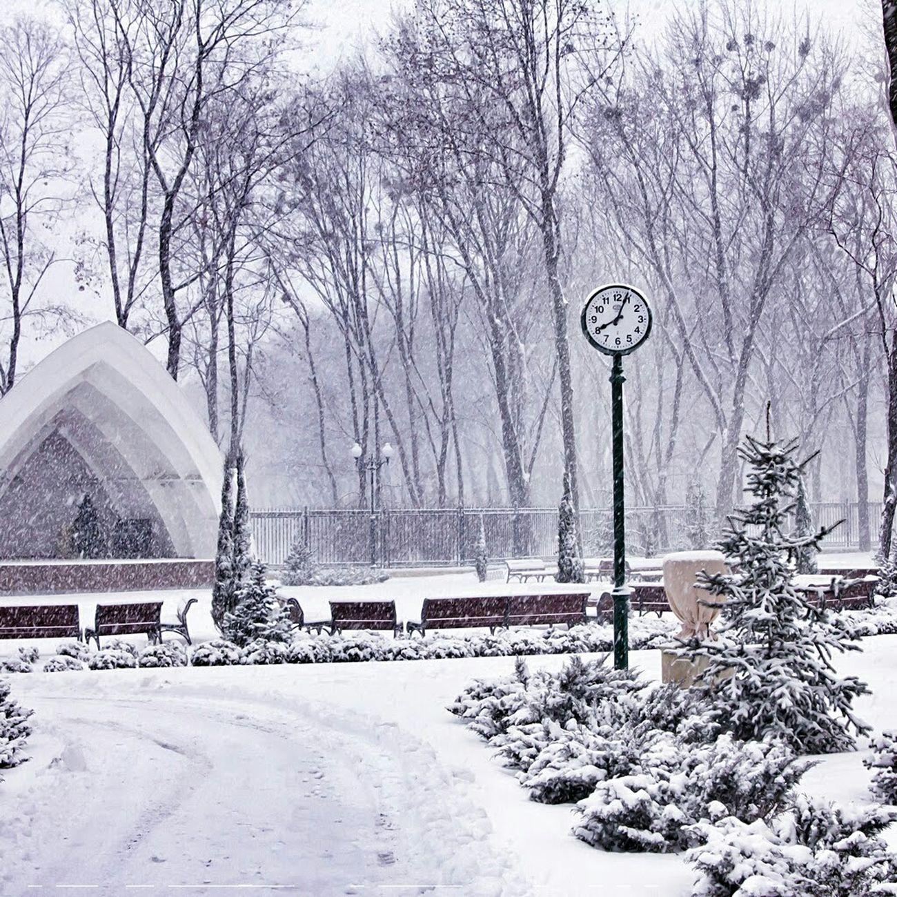 Snow прогулка январь зима Харьков парк снег Winter Nature Природа