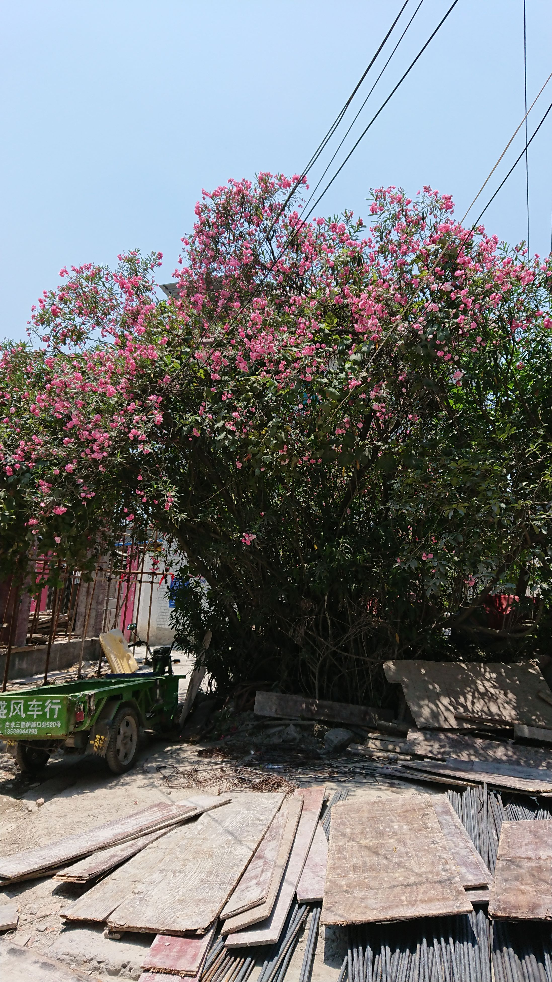 growth, no people, day, tree, flower, transportation, nature, outdoors, beauty in nature, clear sky, fragility, freshness, sky