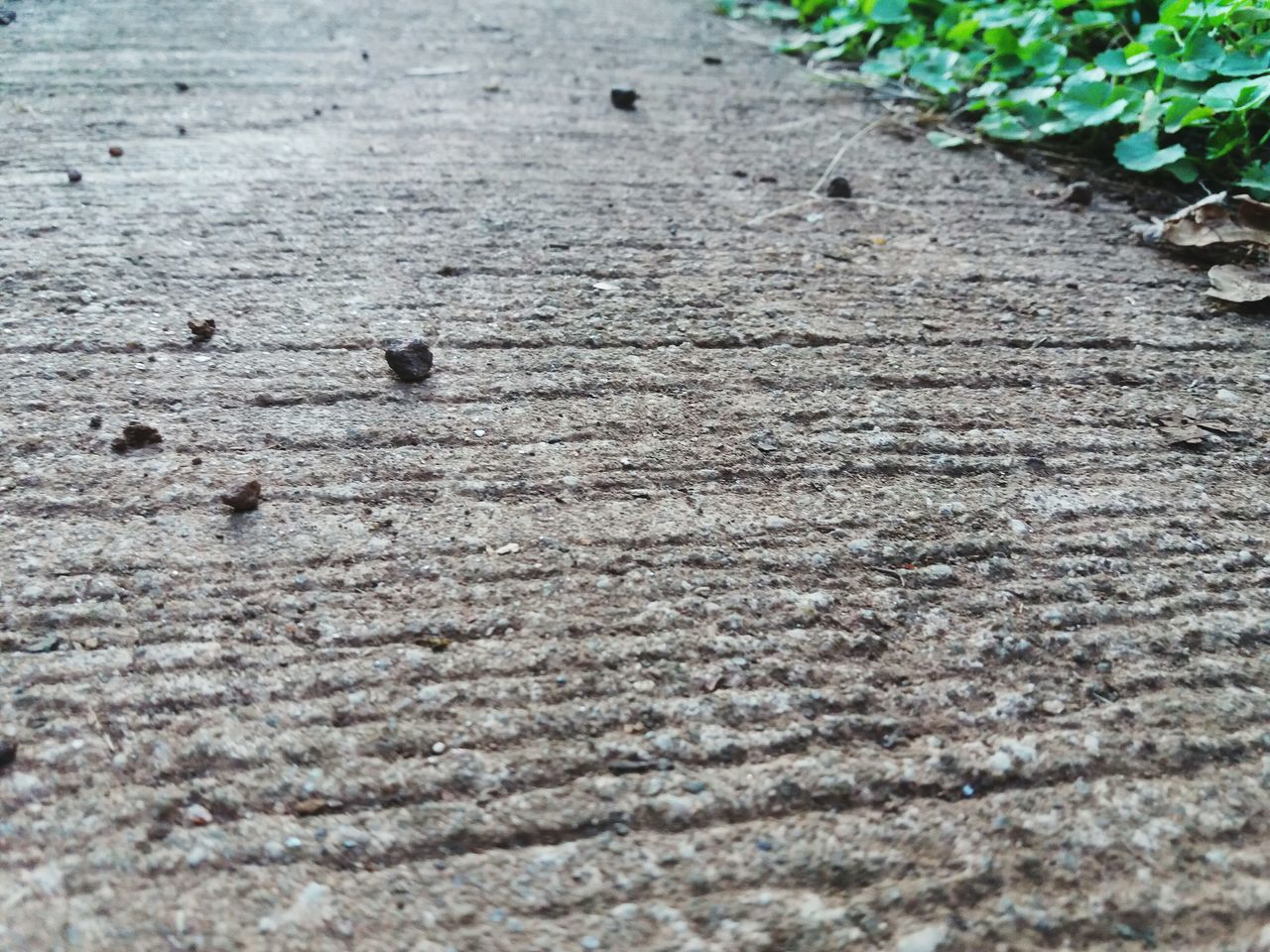 The Road. My Favorite Photo Close Up Cementery Concrete Floor Full Frame Uniqueness High Angle View Nature_collection Nature On Your Doorstep Nature Beauty Beautiful View No People Textured  Day Nature Outdoors Backgrounds Close-up Animal Themes Paw Print
