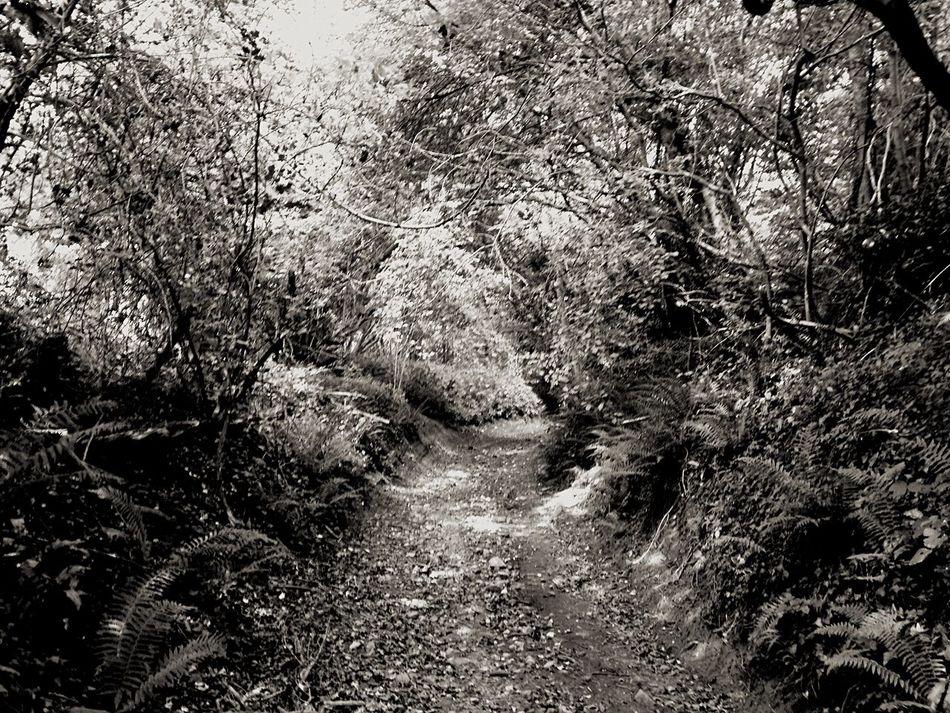 Countryside Landscape_Collection Blackandwhite Ladyphotographerofthemonth
