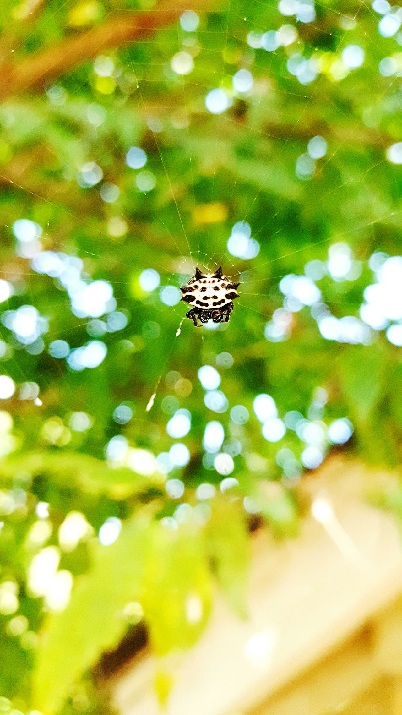 Spider Web Nature Beauty In Nature Insect Leaf Green Color