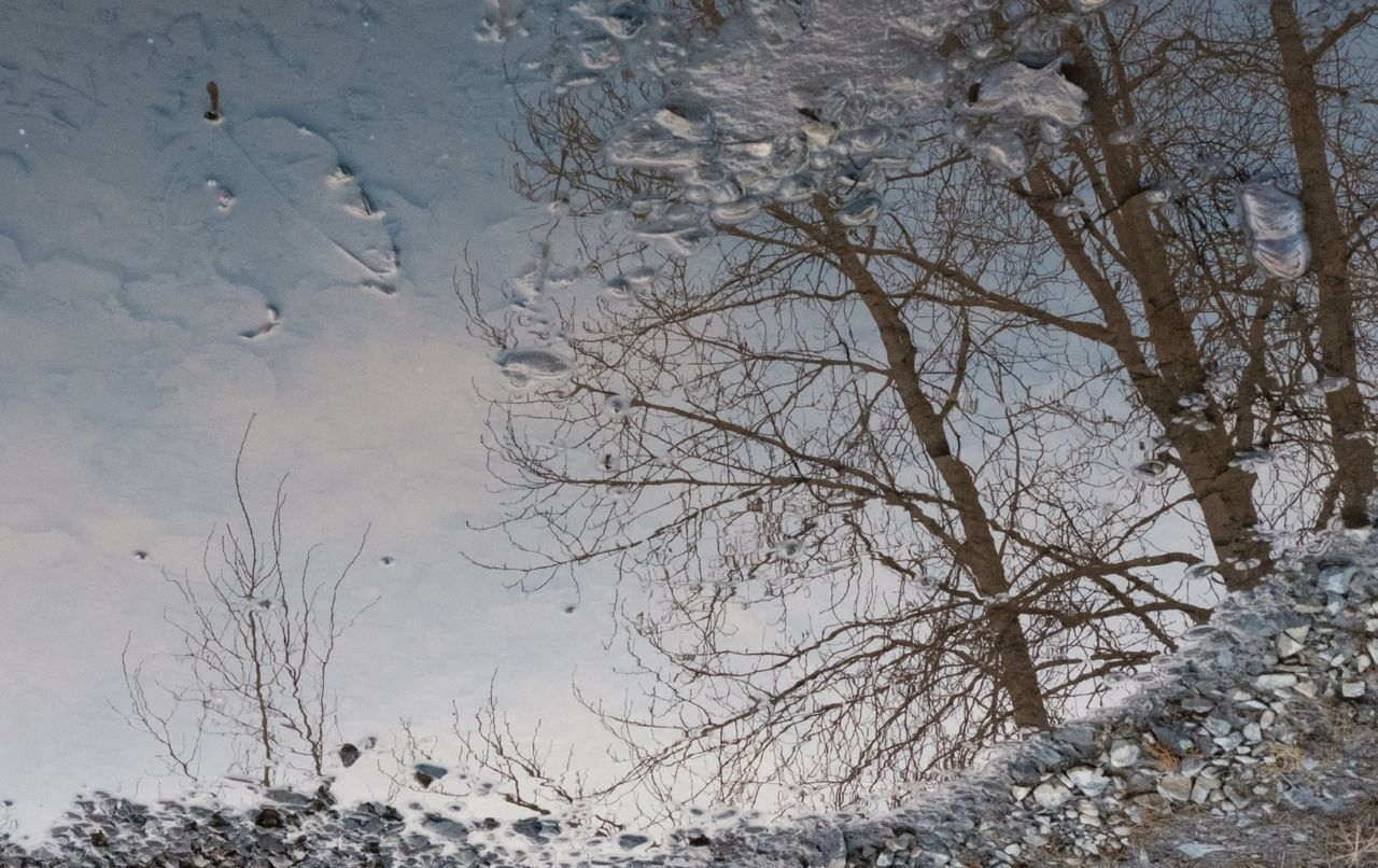 winter, snow, bare tree, nature, cold temperature, weather, outdoors, tree, tranquility, no people, beauty in nature, tranquil scene, day, landscape, scenics, branch, water