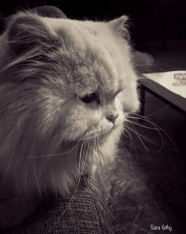 Moment Animal Cat Blackandwhite Winter2017 Photo Is Happiness