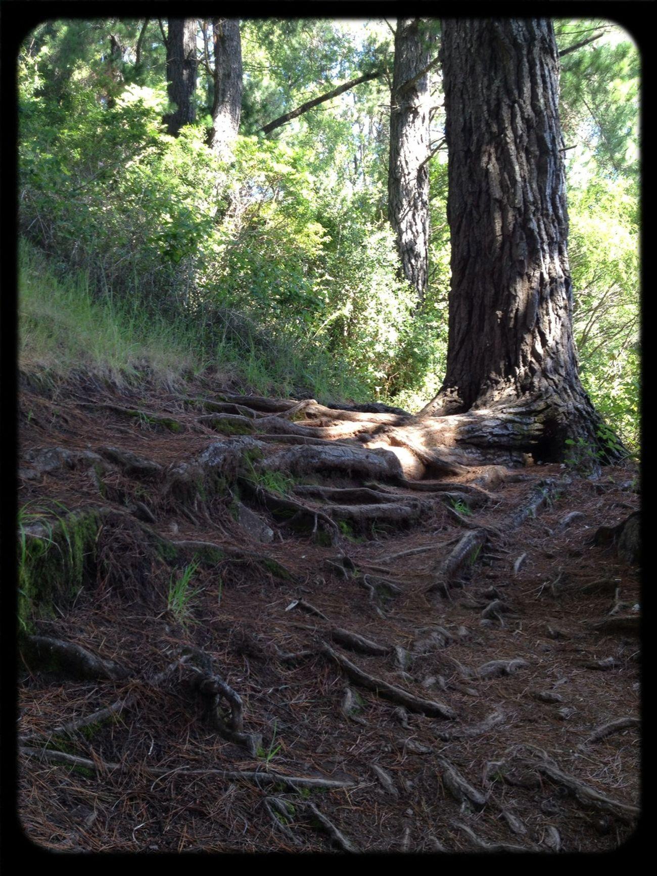 árboles, Sin Filtro.