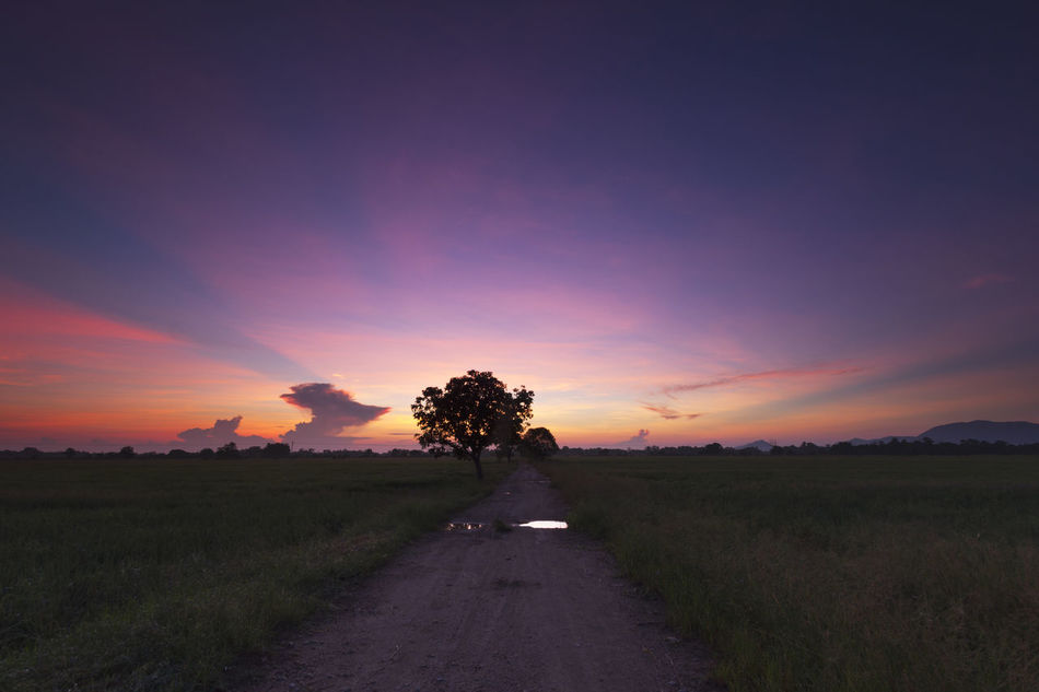 Beautiful sunrise with silhouetted tree. Agriculture Beauty In Nature Day Field Grass Growth Landscape Nature No People Orange Color Outdoors Road Rural Scene Scenics Sky Sunset The Way Forward Tranquil Scene Tranquility Tree Tree, Travel, Tranquil, Landscape, Nature, Sunrise, Sunset, Tropical, Paradise, Summer, Scenery, Asia, Silhouette, Tourism, Orange, Destination, Beautiful, Background, Colorful, Holiday, Yellow, View, Outdoor, Evening, Sunny, Dusk, Horizon, Scenic, Resort, Countryside, Flora, Location, Morning, Panorama, Vivid, Plantation, Path, Famous, Rural, Light, Leaf, Growth, Green, Freshness, Fresh, Honeymoon, Love, Wallpaper, Relaxation, Conceptual