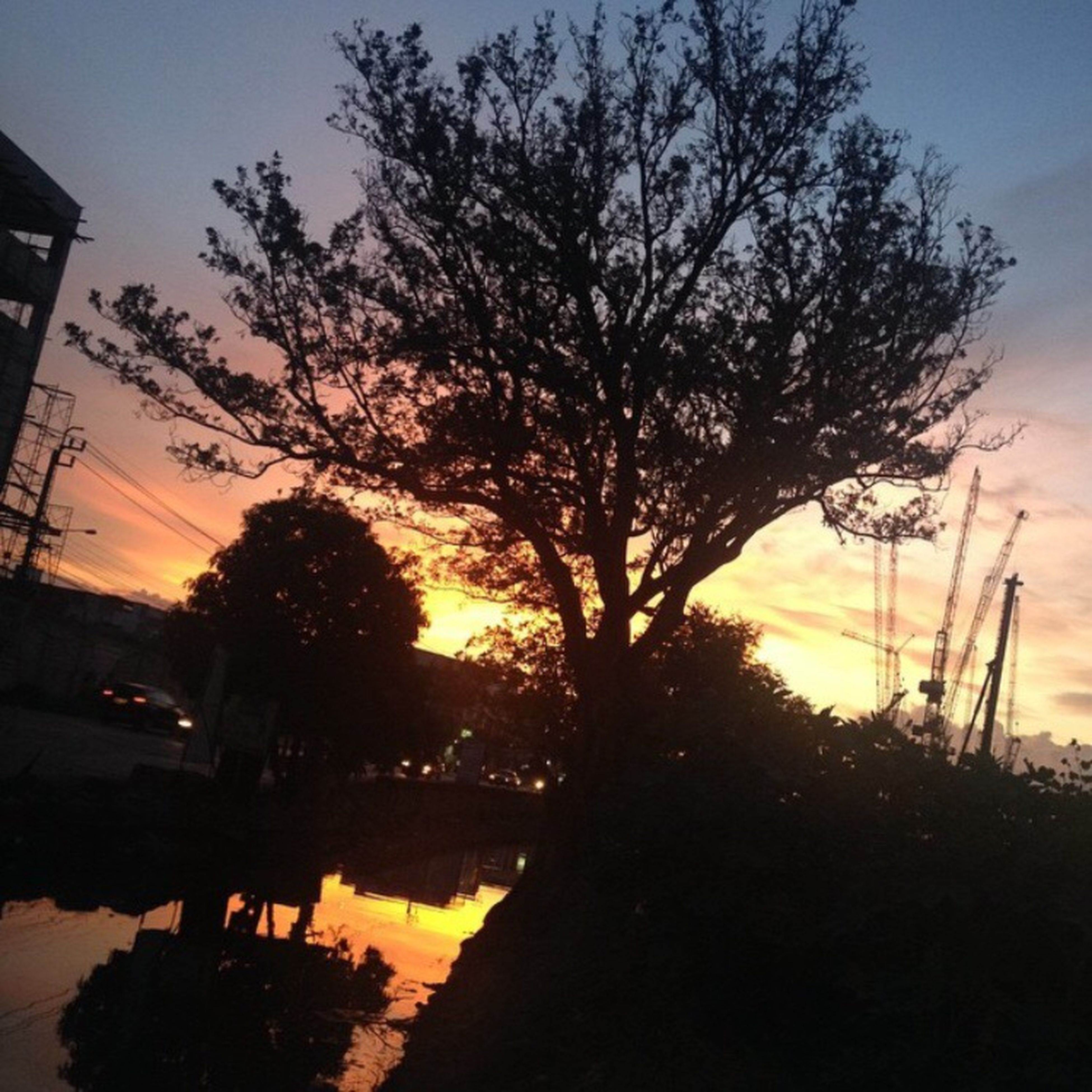 sunset, silhouette, tree, sky, orange color, water, tranquility, beauty in nature, scenics, tranquil scene, nature, reflection, cloud - sky, branch, idyllic, growth, river, power line, no people, dusk