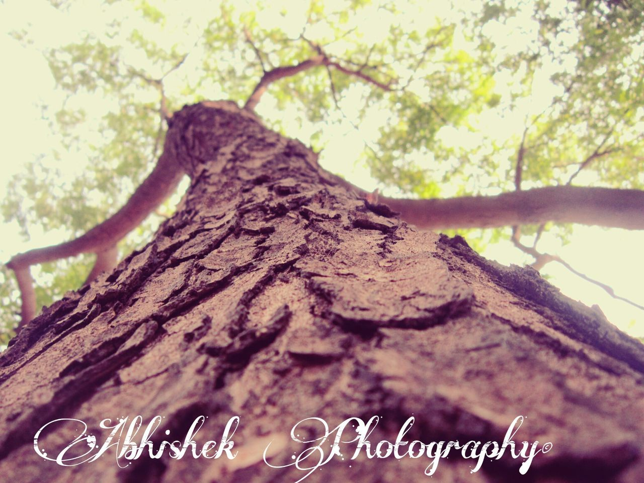 tree, text, no people, focus on foreground, nature, close-up, day, tree trunk, branch, tranquility, growth, outdoors, beauty in nature, sky