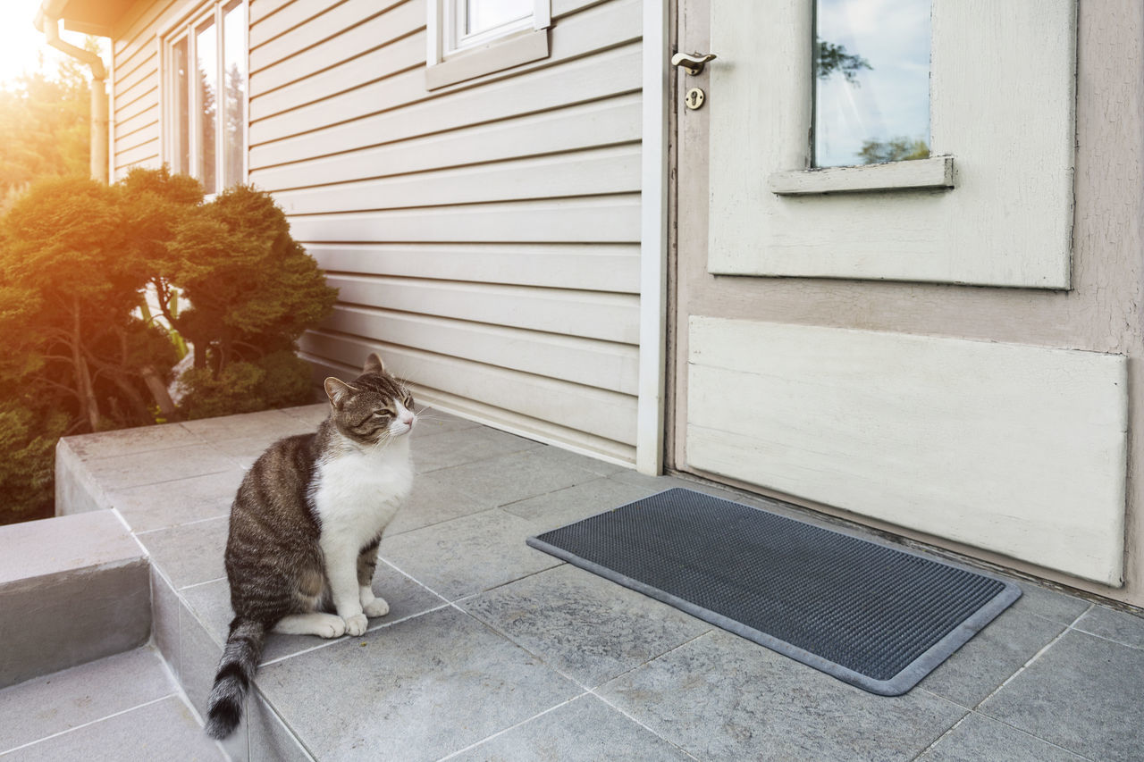 Cat sitting, waiting at home door. House, sun, backlit. Stair. Animal Themes Cat Day Domestic Animals Domestic Cat Door Home Homestead No People One Animal Outdoors Pets Sitting Stairs Sun Sunlight Sunlit Waiting Wall