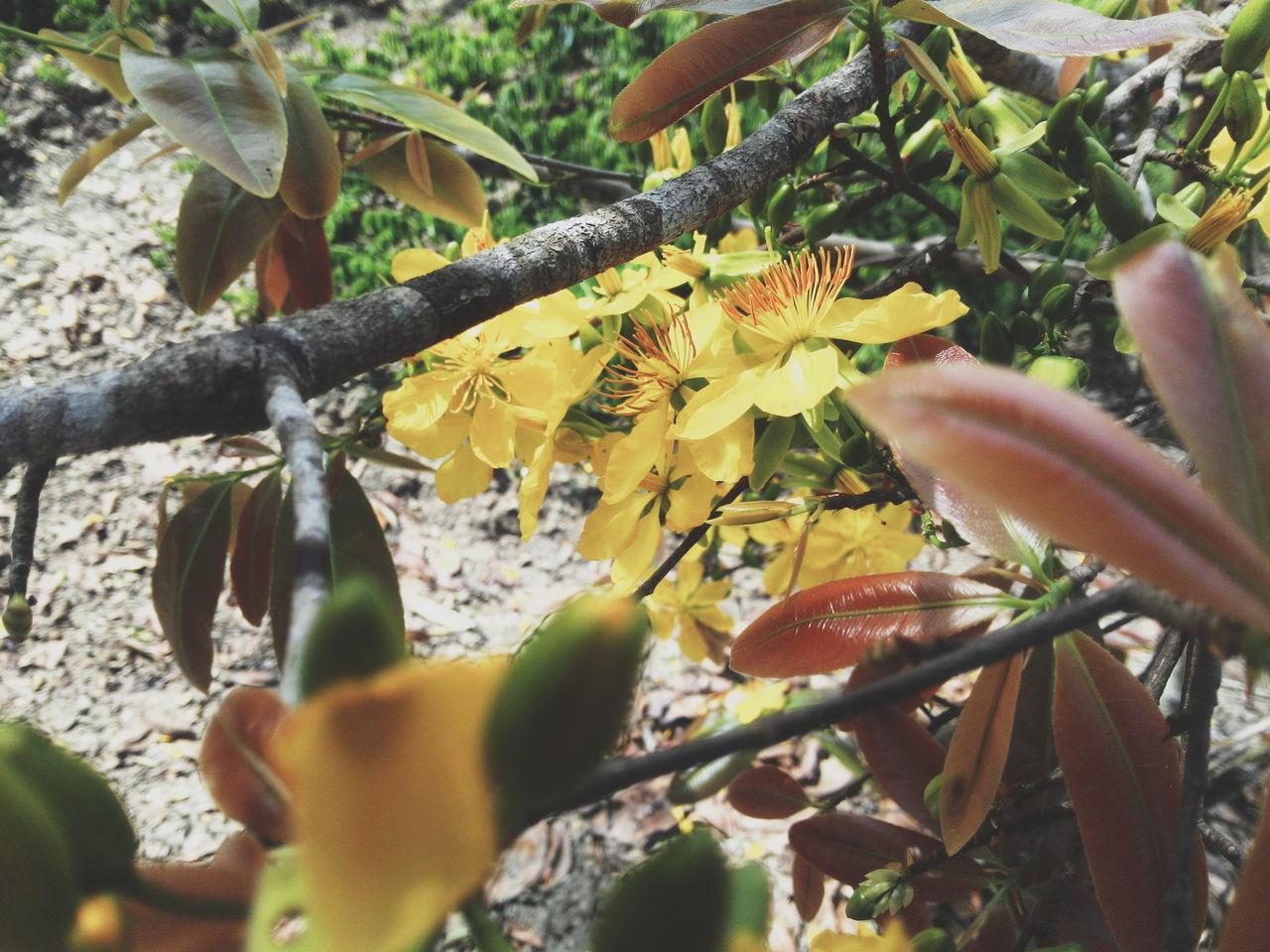 The fifth day in lunar new year 🎆🎉 Natural Beauty Flowers Nature Vietnam Lunar New Year Binhthan Tetholiday Life Vscocam TheWeekOnEyeEM Enjoying Life Showcase: February ApricotBlossom