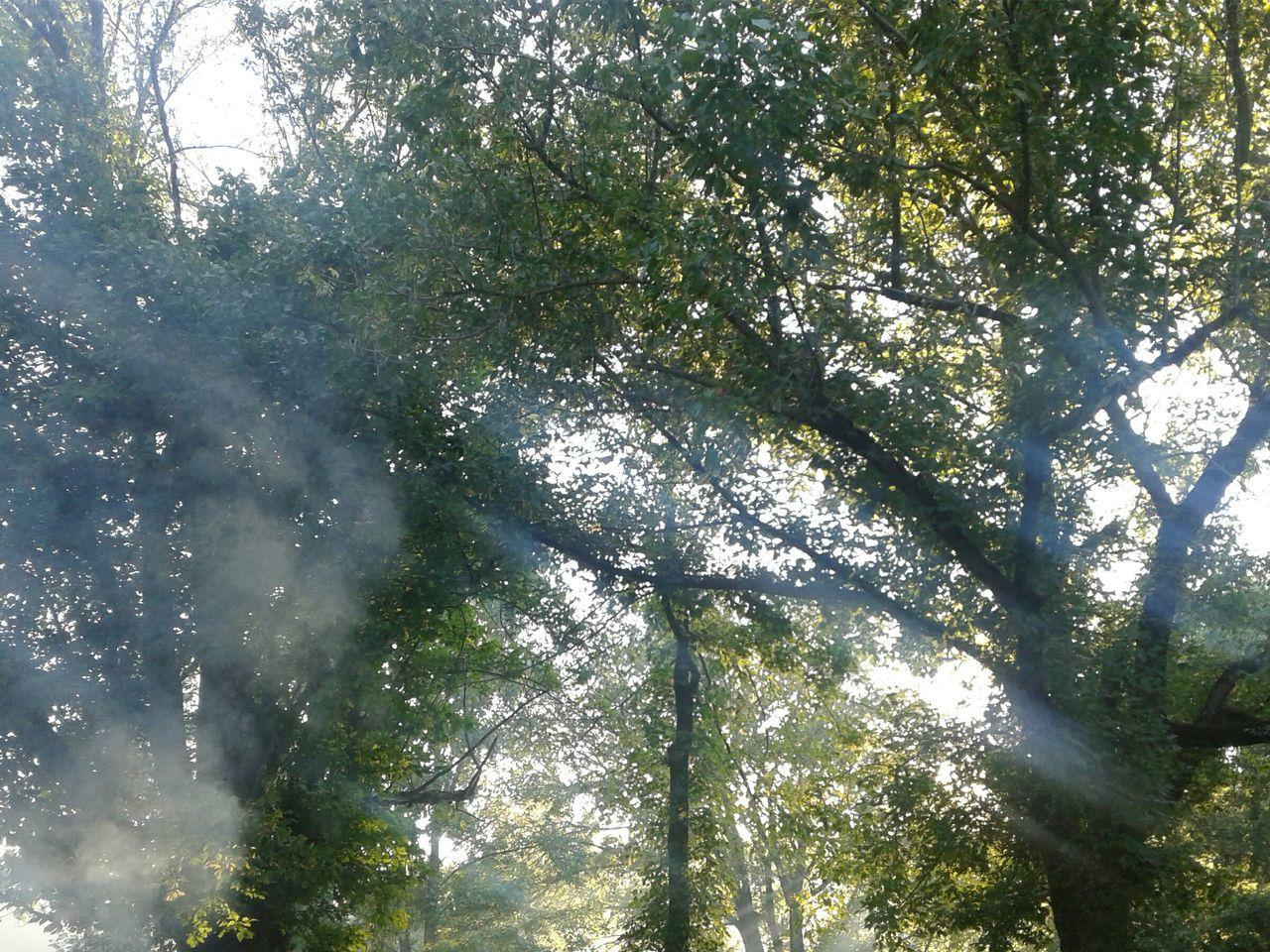 Countryside Sky Non-urban Scene WoodLand Majestic Outdoors Smoke♥ Smokey Sunset Sun Flare Tree Trunk