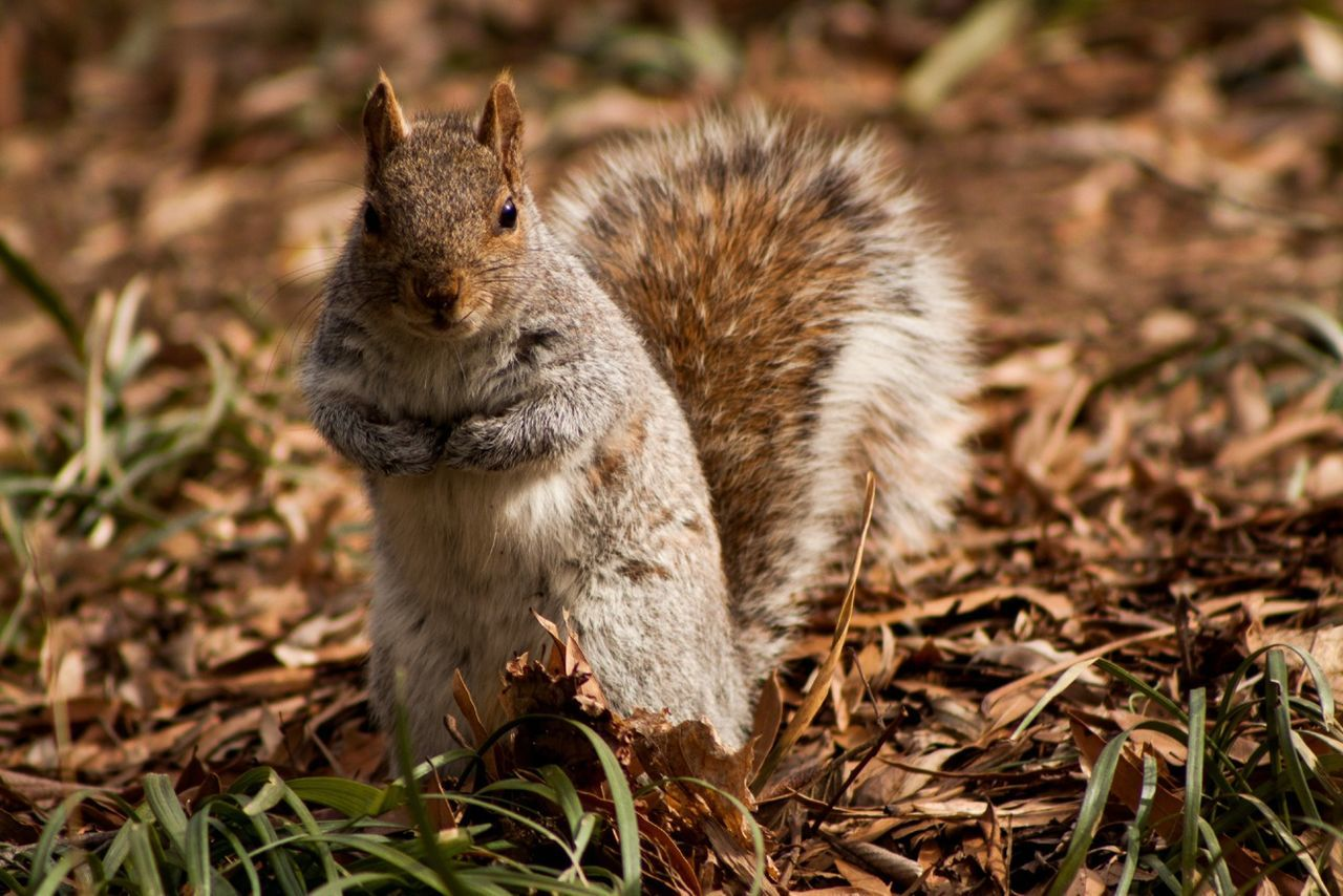 Nature Animals Squirrel