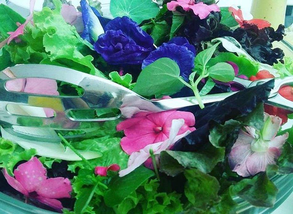 Garden salad. Literally. Garden Salad Gardensalad Foodie Foodstagram Foodporn Foodgasm Instafoods Flowers Instalike Instamood Instagood Followstagram Tweegram Megusta Melikey Greens Igersmanila IGDaily Igersdaily WheninTagaytay