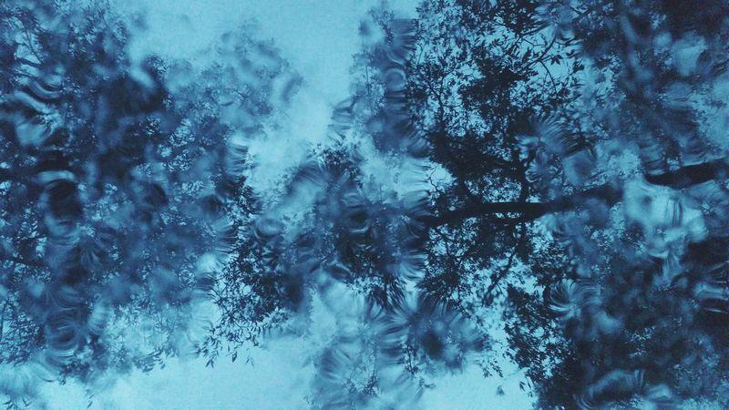 Rainy Days Rainy Season Rain Tropical Storm Louisiana Trees Treescollection Sky Fall Fall Beauty Fall Colors Fall_collection Cold Rain Rain Drops Window Sun Roof Showcase: November