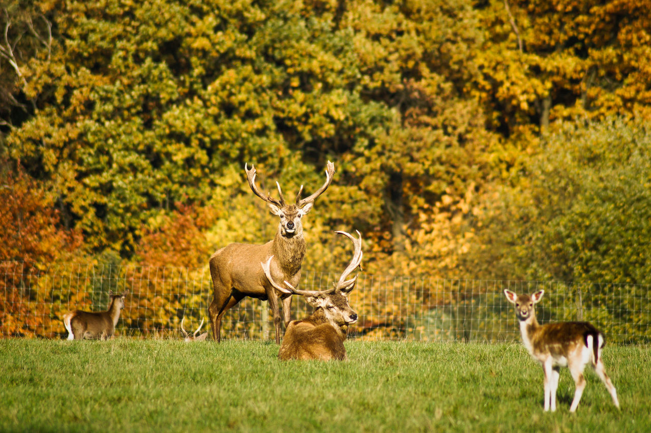 Stags On Field Against Trees