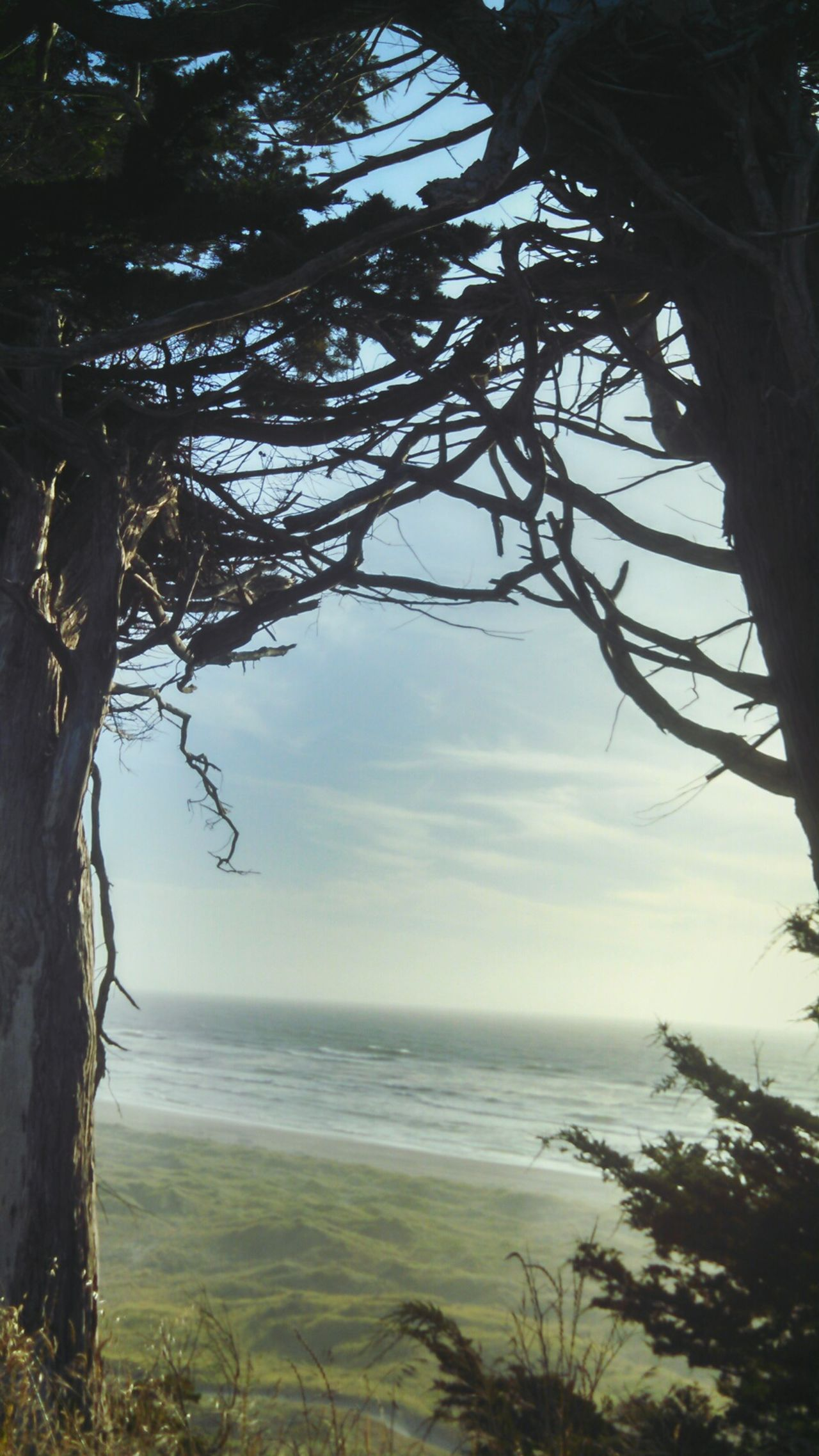 Ocean View Between The Trees Eucalyptus Tree Table Bluff California Dreaming North Coast Smartphonephotography Motorola Lobuephotos EyeEm Nature Lover Mobile Photography EyeEm TreePorn