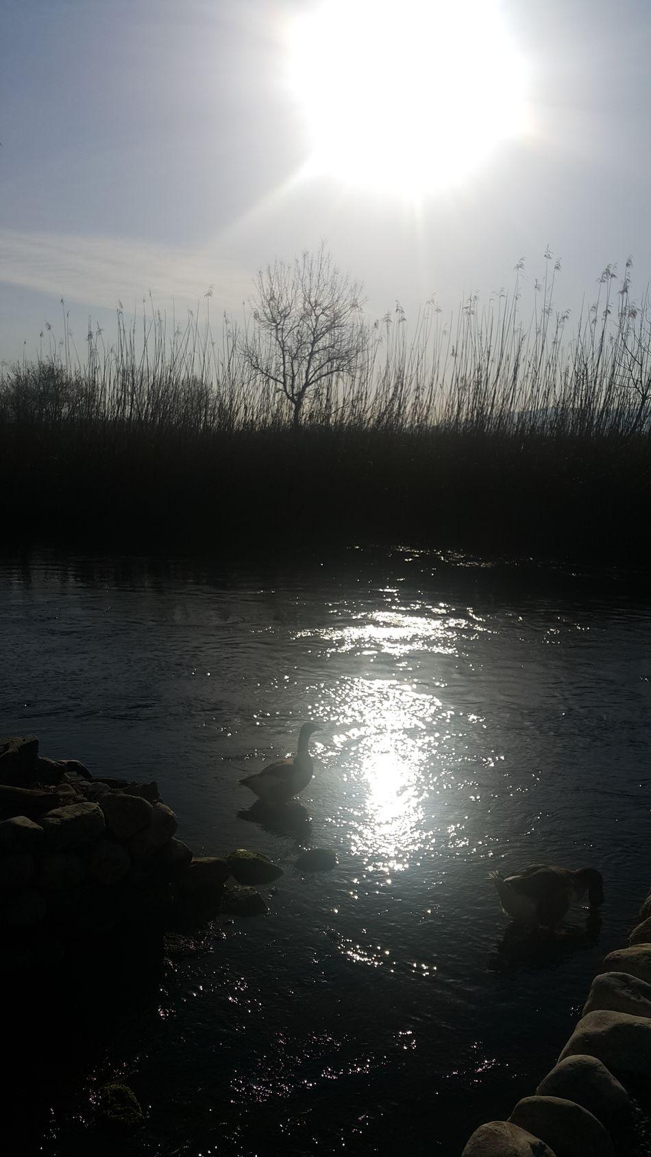 Phosphorescence Goose Morning Sunrise River Riverscape Nature Photography Reeds No Filter No Edit where Akyaka