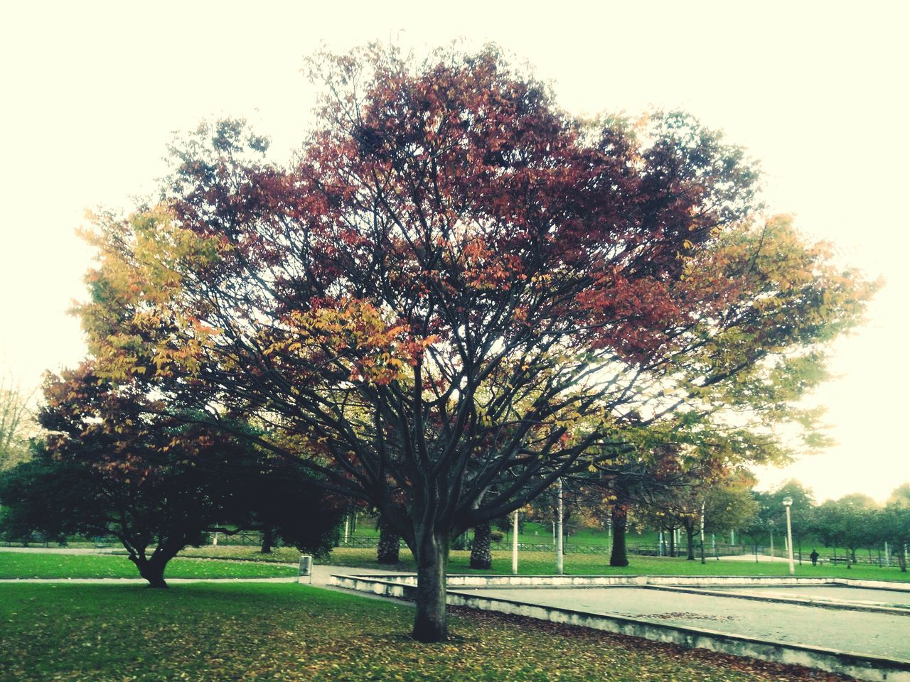 Fall Colors Tree Nature Urban Nature Growth No People Outdoors Day Sky First Eyeem Photo