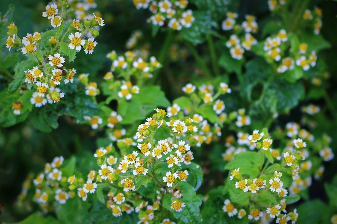 Flowering season... Flower Nature Yellow Close-up Macro Photography Wonderfulindonesia