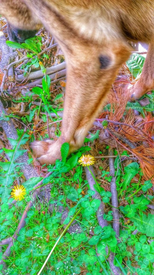 https://youtu.be/-3BGmTcKPAY One Step At A Time The K9GB My Dogs Are Cooler Than Your Kids We Are Nature Color Of Life EyeEm Animal Lover Learning From Nature Musical Photos Lyricalartistry Who's Afraid Of The Big, Bad Wolf?