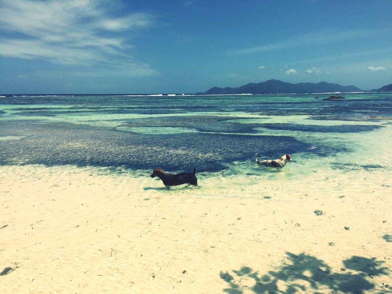 Sea Horizon Over Water Tranquil Scene Sky Shore Coastline Seascape Dogs Fresh On Eyeem