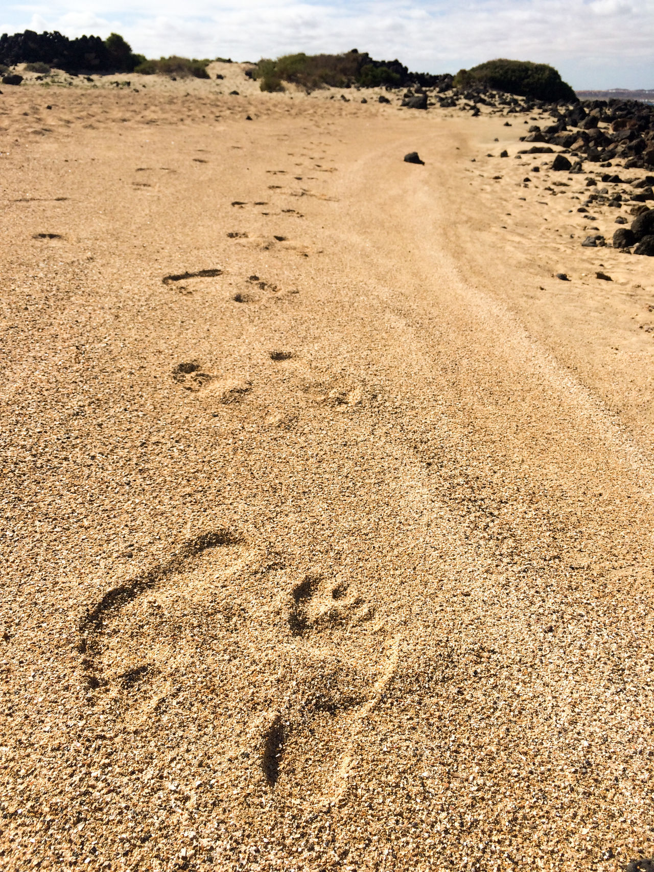 Weird foot traces on the beach of Lobos island Beach Canary Islands Close-up Day FootPrint Human Traces Island Islandlife Lobos Nature No People Outdoors Sand Sunlight Sunshine Traces Traces In The Sand Weird