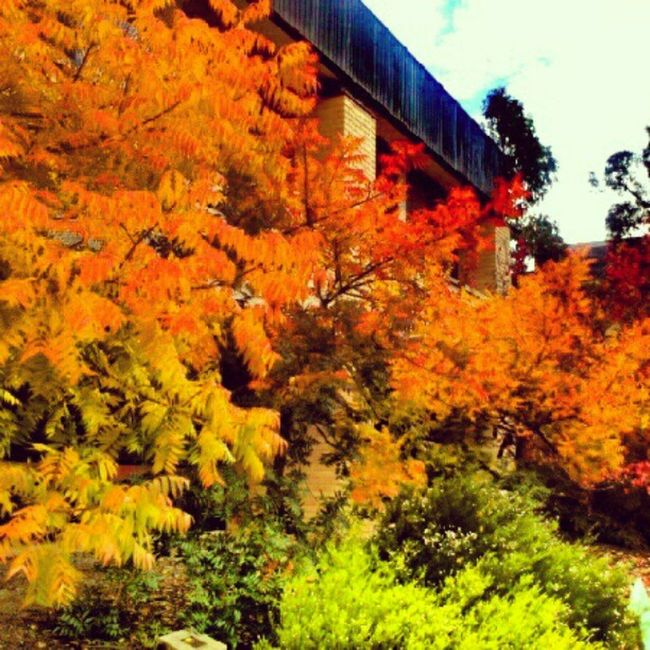 Delighting in the fall foliage