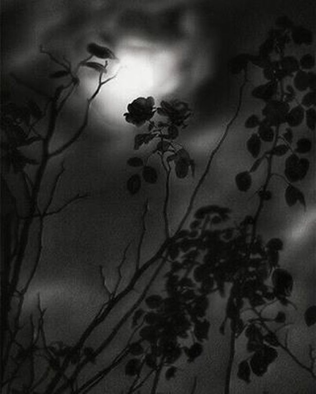 Match_bw Bw_lover Dark_nature Best_bnw_archive Bnw_captures Nature Naturelovers Insta_bw Pocket_bnw Srs_bnw Rsa_bnw Like4like Likeforlike Ayad_bnw Moonlight