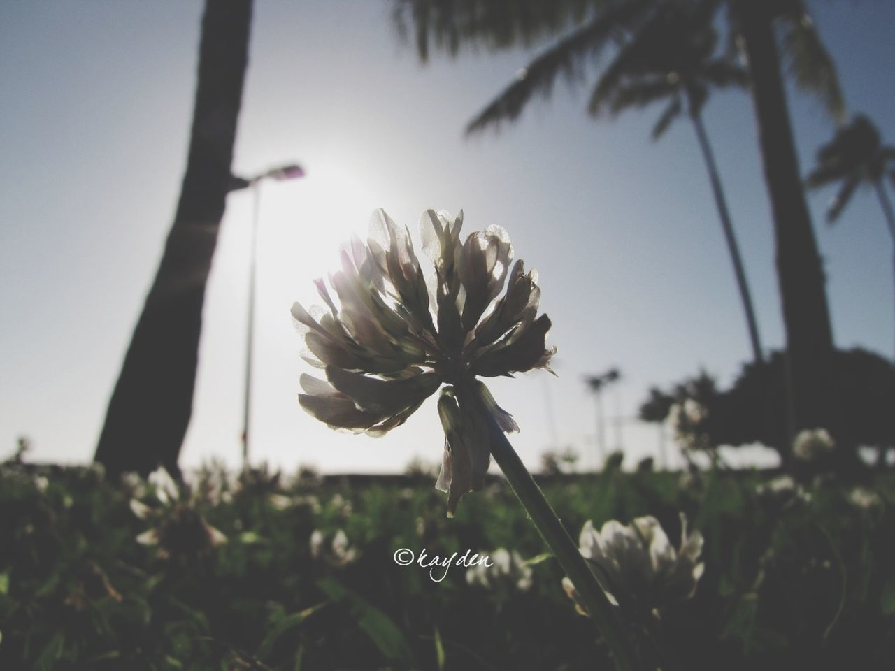 flower, growth, nature, fragility, beauty in nature, plant, freshness, petal, focus on foreground, stem, flower head, outdoors, no people, close-up, blooming, day, springtime, tree, sky
