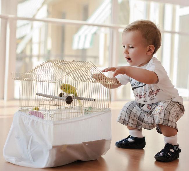 Portrait Children Parrot Innocence