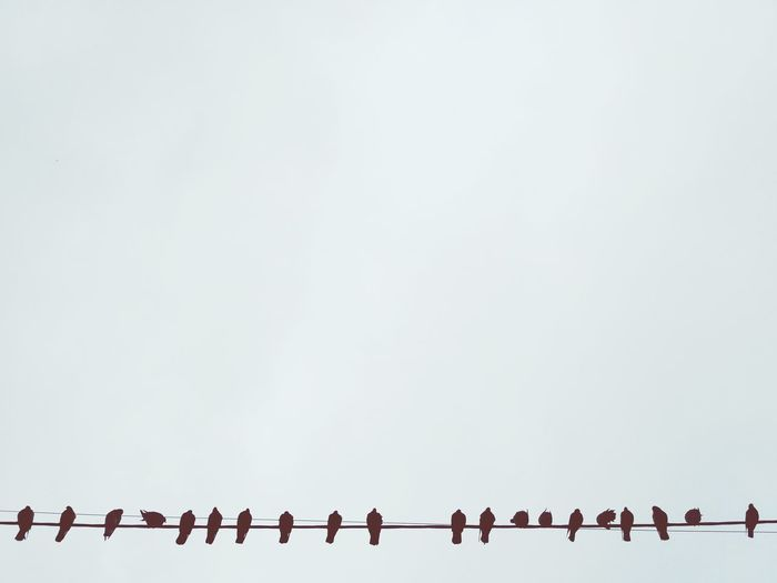 Animal Wildlife Bird Animal Themes Large Group Of Animals Flock Of Birds Colony Conformity Togetherness Outdoors Nature Beauty In Nature Sky No People Peageons Birds_collection Birds Birds On A Wire Wire Wires Wires In The Sky Wires And Sky Sitting Bird Sky Background Stormy Sky Silhouette The Week On EyeEm