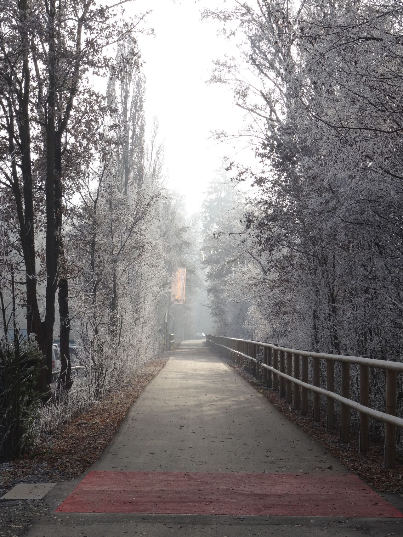 Tree The Way Forward Nature Tranquility Beauty In Nature Outdoors No People Day Scenics Fog Sky Cold Temperature Winter Wonderland White Frost Snow Clear Sky Germany