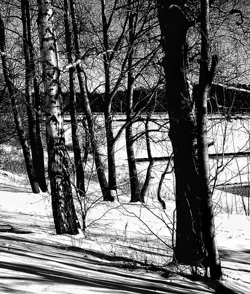 Tree Nature No People Tranquility Outdoors Day Growth Beauty In Nature Scenics Close-up Backgrounds Sky Water Landscape Mountain Beauty In Nature Winter Blackandwhite Photography Black & White Monochrome Photography Light And Shadow Cold TemperatureFrozen Snow ❄ Lake
