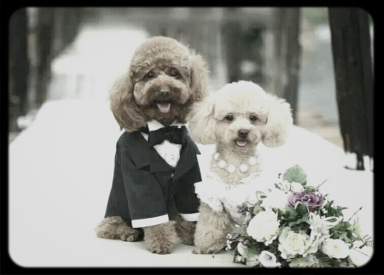 Dogs Couple Collections