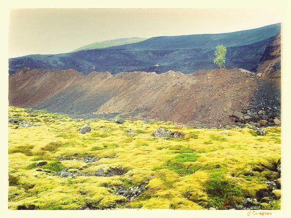 Last tree standing in the sandmines Trees Sandmines Nature Iceland